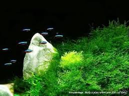 Live Plants In Community Aquariums by 70 Best Community Aquarium Ideas Images On Pinterest Aquarium