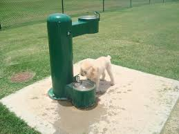 considering dog water fountains design for healthy dog u2014 great