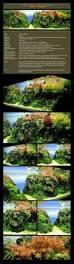 364 best aquascaping images on pinterest aquascaping aquarium