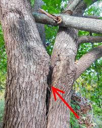 tree work arboriculture safework nsw