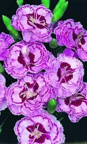 Real Flowers - 205 best real flowers images on pinterest plants pretty flowers