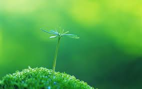 close up green macro nature plants walldevil
