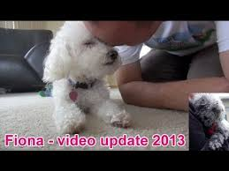 Pictures Of Blind Dogs Fiona The Blind Dog New Video Update 2013 Youtube