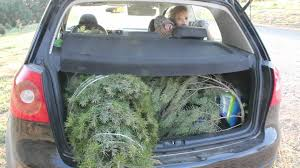today we learn how to cut down a christmas tree youtube