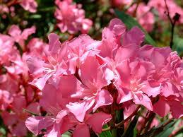 indoor flowers indoor flowering plants part 6