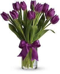 tulips flowers purple tulips flowers purple tulips flower