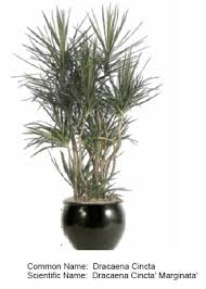 low light plants for office indoor plants for office and home serving all of san diego county