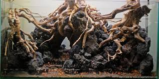 spiderwood and driftwood aquascaping world forum