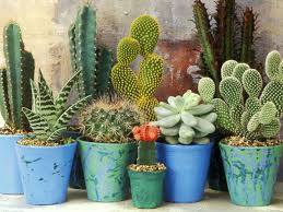 secrets of growing cacti and succulents world of succulents