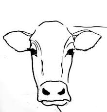 step by step cow drawing face google search u2026 pinteres u2026