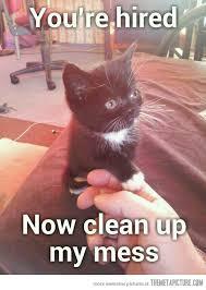 Funny Kitten Meme - you re hired cat animal and kitten
