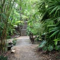 Ucla Botanical Garden Ucla Mildred E Mathias Botanical Garden Westwood 10 Tips From