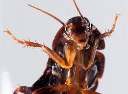 roaches in my bathroom fred my friendly bathroom cockroach chris travels