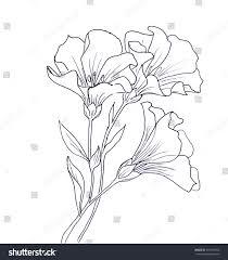 line ink drawing flower butterfly black stock illustration