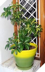 25 best easy house plants ideas on pinterest plants indoor