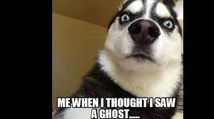 Ghost Meme - 9 memes that prove fans of paranormal have a sense of humor the