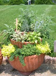 Vegetable Pot Gardening For Beginners Ready Set Grow Veggies In Containers Boulder County