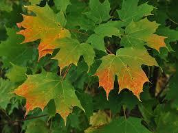 why fall leaves change color jbyrd nurseries llc