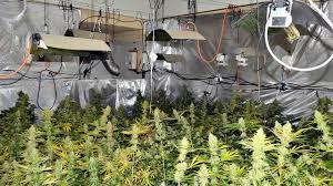 chambre de culture interieur une chambre de culture de 108 pieds de cannabis découverte