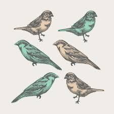 birds peel and stick