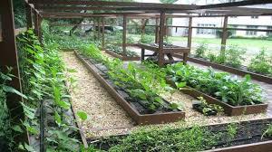backyard veggie garden happy house and garden social site urban