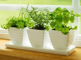 how to plant a kitchen herb garden hgtv