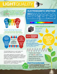 how does light affect plant growth which wavelengths of light are the most effective in photosynthesis