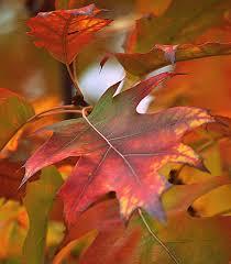 autumn color palette by svitakovaeva on deviantart