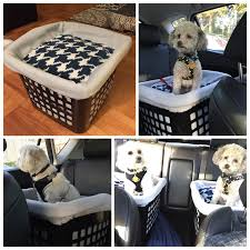 Rug Doctor On Car Seats Best 25 Dog Seat Belt Ideas On Pinterest Dog Car Seat Belt Dog