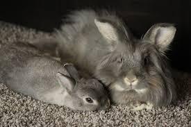 inspirational bunny kitchen appliances taste