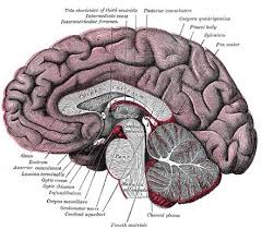 Ct Anatomy Of Brain Ppt Ventricular System Radiology Reference Article Radiopaedia Org
