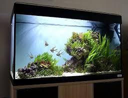 Aquascapes Com 20 Best Aquascape Images On Pinterest Aquarium Ideas