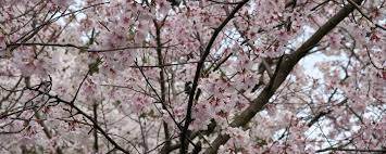flowers blossoms high quality flowers flower wallpaper hd