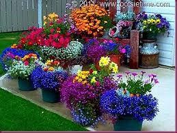 204 best flowers u0026 garden images on pinterest flowers garden