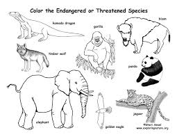 100 tundra animals coloring pages articles with minnie mouse