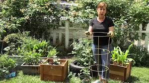 how to set up a round tomato cage garden space youtube