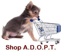 Dogs For The Blind Adoption A D O P T Pet Shelter Until Every Pet Has A Home