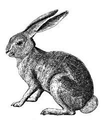 vintage rabbit the graphics free vintage graphic rabbit