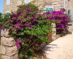 flieder balkon mediterraner wohnstil 7 geniale wohnideen