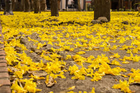 free images nature field leaf flower autumn yellow flora