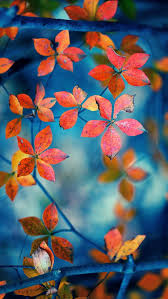 imagenes de otoño para fondo de escritorio red hojas ramas otoño iphone fondos de pantalla 640x1136 iphone