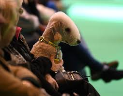 feeding a bedlington terrier a bedlington terrier during day one of crufts 2017 at the nec in