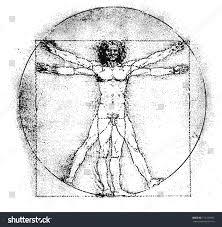 Leonardo Da Vinci Human Anatomy Drawings Vetruvian Man Human Anatomy Study By Stock Vector 172129955