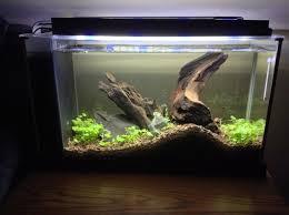 Aquarium Decoration Ideas Freshwater 218 Best Aquascaping Images On Pinterest Aquarium Ideas
