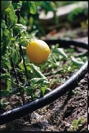 flower gardening 101 gardening 101 gardening tips for beginners my kirklands blog