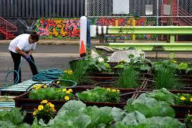 Urban Vegetable Garden by Cadillac Urban Garden We Are Ideal