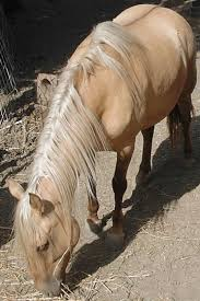 mustang horse colors