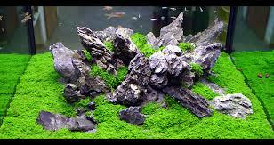 Aquascap Pd Aquatic Natura Indonesia Aqua Scape