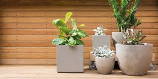 d i y hanging plants bunnings warehouse