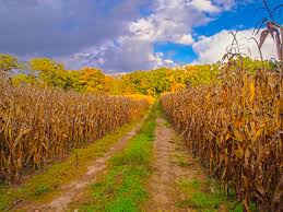 Indiana scenery images 13 cities in indiana with the most breathtaking sceneries jpg